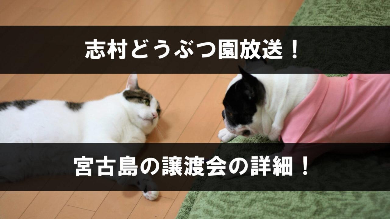 志村どうぶつ園で放送された宮古島の譲渡会
